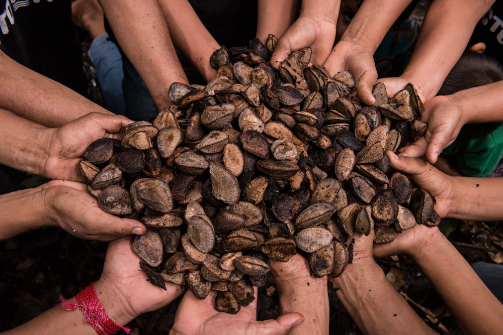 Experiência de geração de renda com a floresta é tema de palestra em Juína