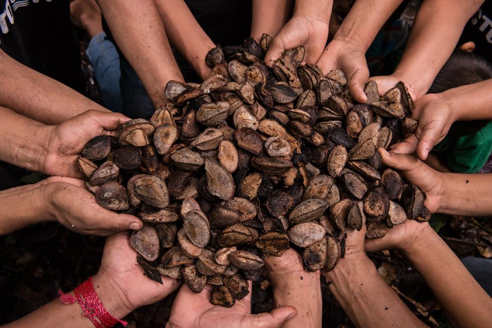 Pacto das Águas participa de seminário sobre cadeia socioprodutiva da castanha