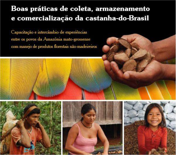 Boas práticas de coleta, armazenamento e comercialização da castanha-do-Brasil