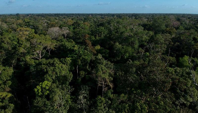 Instituições protestam contra medida que susta 11 Unidades de Conservação em Rondônia